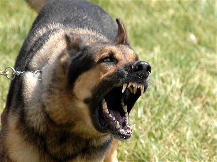 الإفتاء: قتل الكلاب والحيوانات الضالَّة غير جائز شرعاً