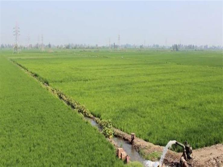 """""""الزراعة"""": نستهلك الكمية الكبرى من المياه.. وحريصون على ترشيد كل نقطة"""
