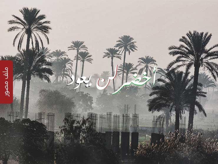 أخضر لن يعود.. حضارة الخرسانة على ضفاف الدائري (ملف مصور)