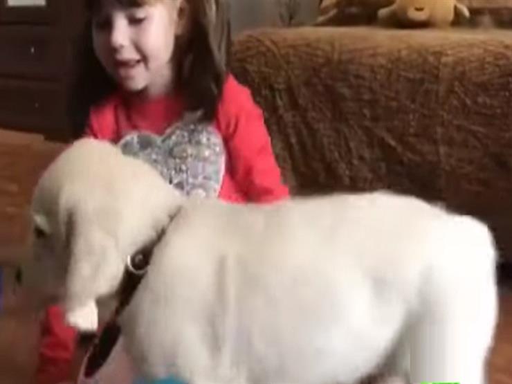 """بالفيديو.. بوتن يهدى طفلة مصابة بالتوحد """"جروًا"""" ذهبيًا"""
