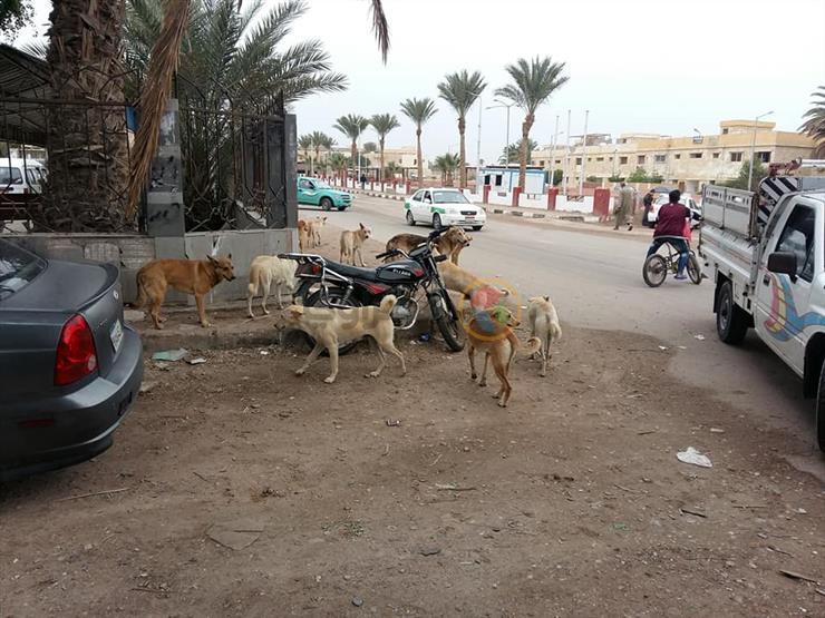 """نواب يطالبون بمواجهة الحيوانات الضالة: """"حماية الإنسان أهم من حق الحيوان"""""""