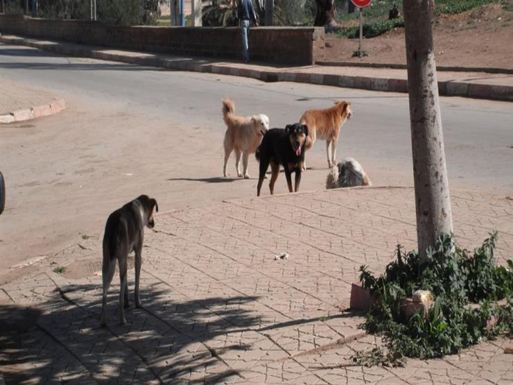 تهدد حياة المواطنين.. الزراعة تعلن عدد حالات عقر الكلاب