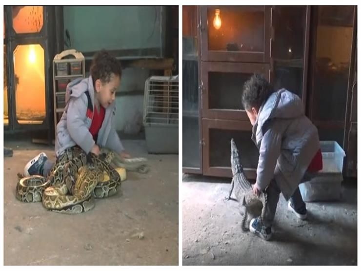 """""""طرزان المصري"""".. طفل يعيش بين الزواحف والحيوانات المفترسة ويلعب معها"""