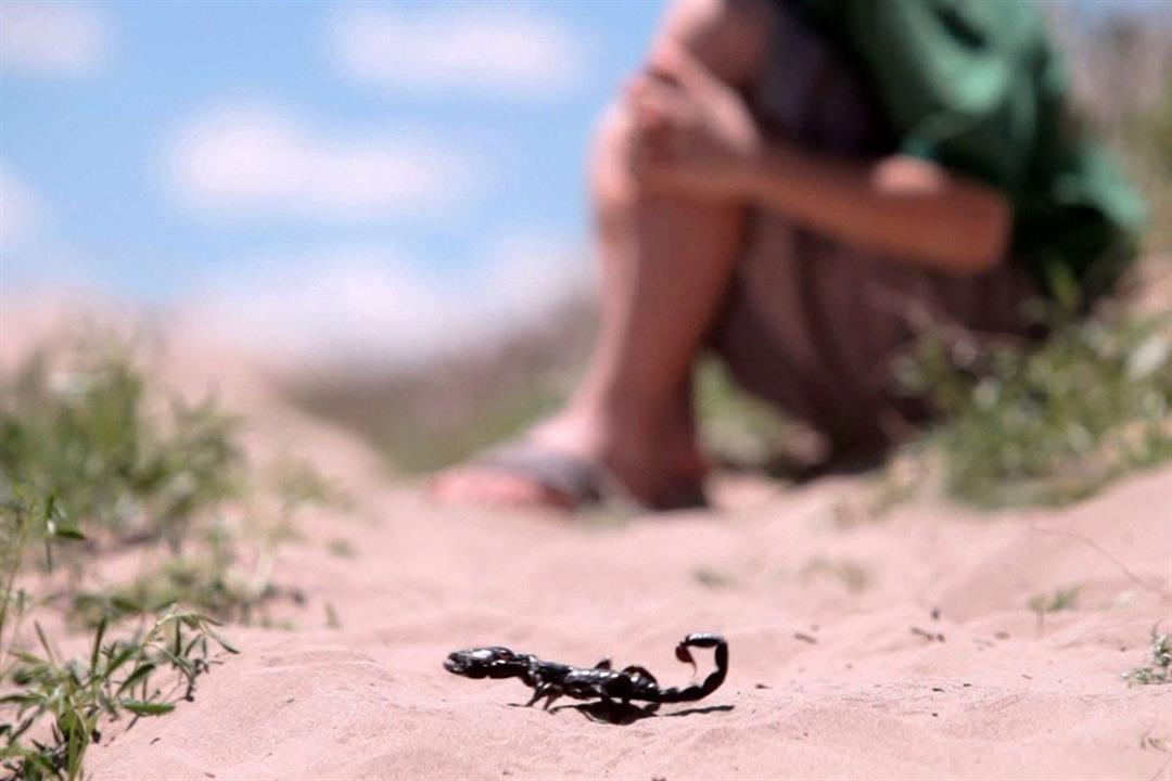 إسعافات أولية لازمة عند التعرض للدغات العقارب والثعابين (انفوجرافيك)