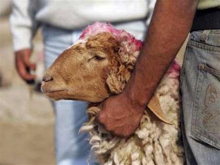 #بث-الأزهر-مصراوي.. هل يجوز توزيع لحم العقيقة نيئة؟