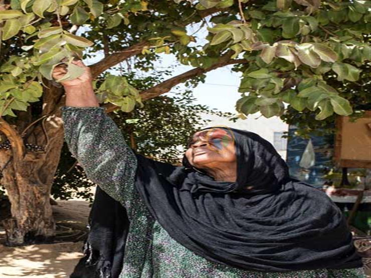 """""""كأني أمها"""".. 30 عاما من المحبة بين سيدة نوبية وشجرة جوافة (صور)"""