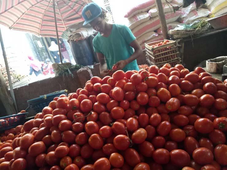 5.5 جنيه لكيلو الطماطم.. أسعار الخضر والفاكهة في سوق العبور اليوم
