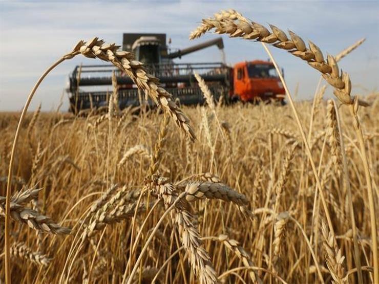زراعة الإسكندرية: حصاد 43 ألف فدان قمح منذ بدء الموسم