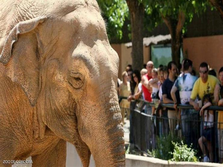 بعد 43 عامًا من العذاب.. نفوق الفيل الأكثر حزنا في العالم