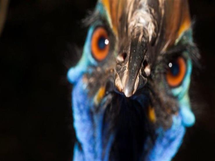 """""""أخطر طائر في العالم"""" يقتل صاحبه في ولاية فلوريدا الأمريكية"""