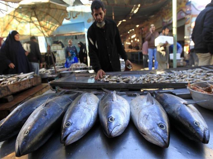 انخفاض المكرونة وارتفاع البوري.. أسعار الأسماك بسوق العبور في شم النسيم