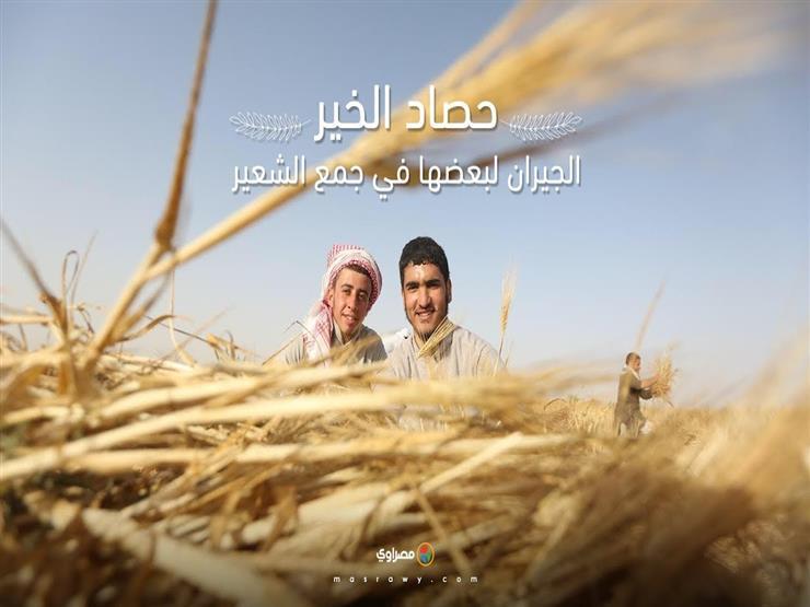 حصاد الخير.. الجيران لبعضها في جمع الشعير