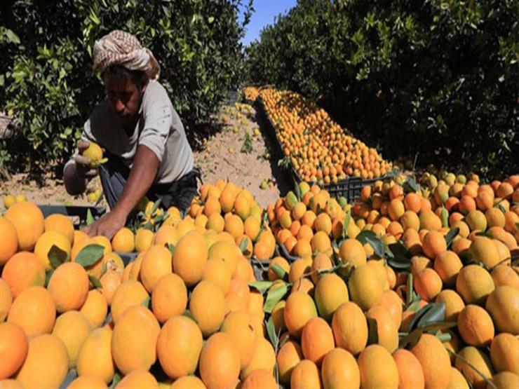 وزير الزراعة يبحث فتح أسواق نيوزيلندا أمام تصدير الموالح المصرية