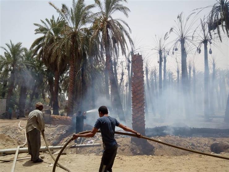 نفوق طيور وتفحم أشجار نخيل في حريقي واحة الداخلة
