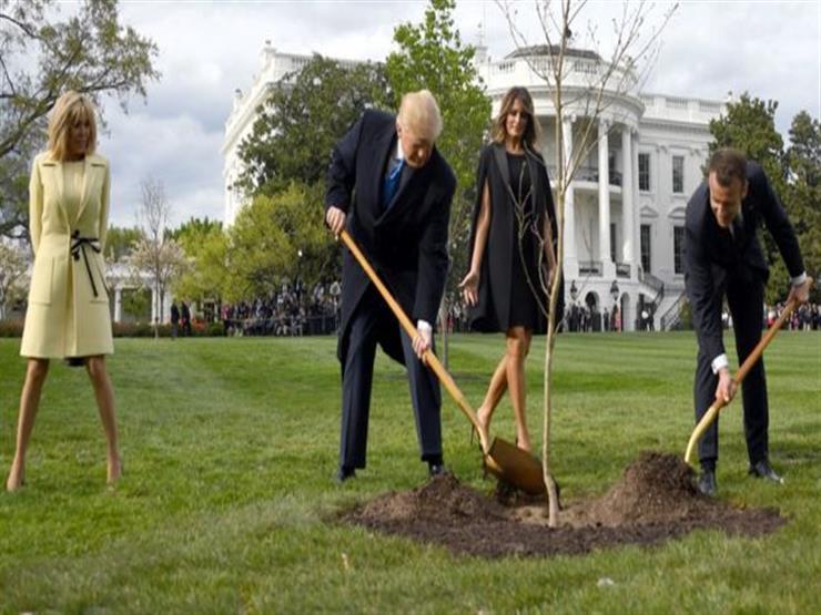 غرسها ترامب وماكرون.. موت شجرة الصداقة الفرنسية الأمريكية