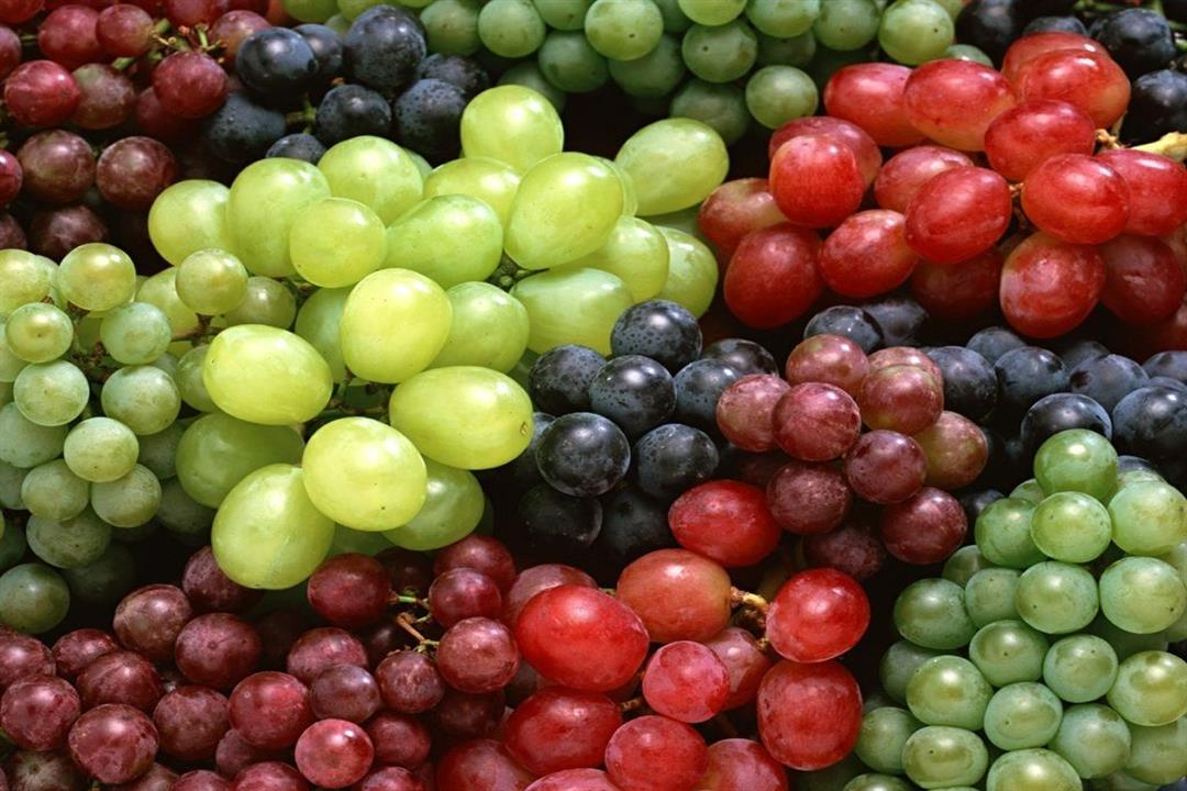يقاوم الشيخوخة.. فوائد عجيبة للعنب