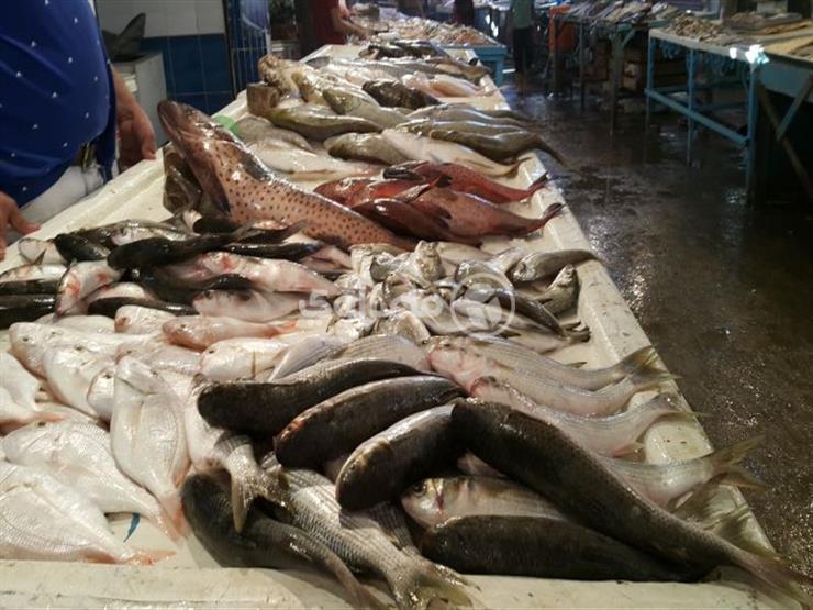 تراجع البوري.. أسعار الأسماك في سوق العبور اليوم