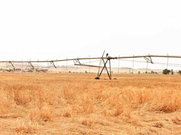 الحكومة: لا صحة لخلط القمح بالتراب داخل الشون والصوامع