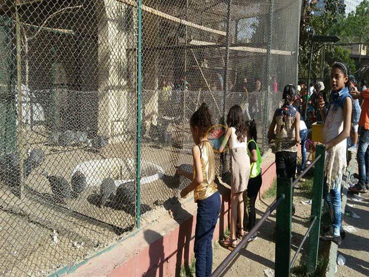العيد فرحة | في ثالث أيام العيد.. إقبال كثيف علي حديقة الحيوان بالجيزة