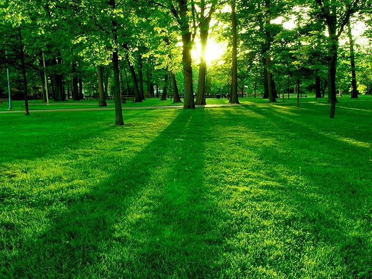 مستشار المفتي يوضح: ماذا تفعل حتى تلقى النبي وأصحابه عند شجرةِ طُوبى