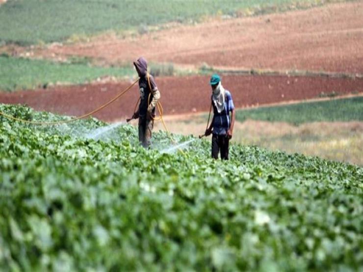 للفلاحين.. كيف تحمي المحاصيل الزراعية من الموجة الحارة؟