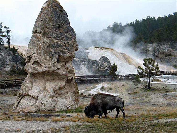 فوارات ساخنة وحيوانات برية.. تعرف على أول محمية طبيعية في العالم