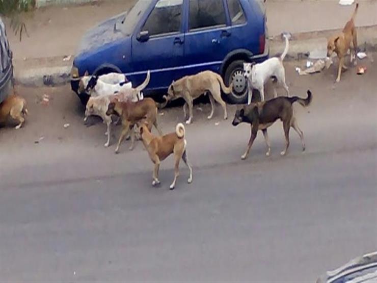كلب مسعور يعقر 4 أشخاص في كفر الشيخ