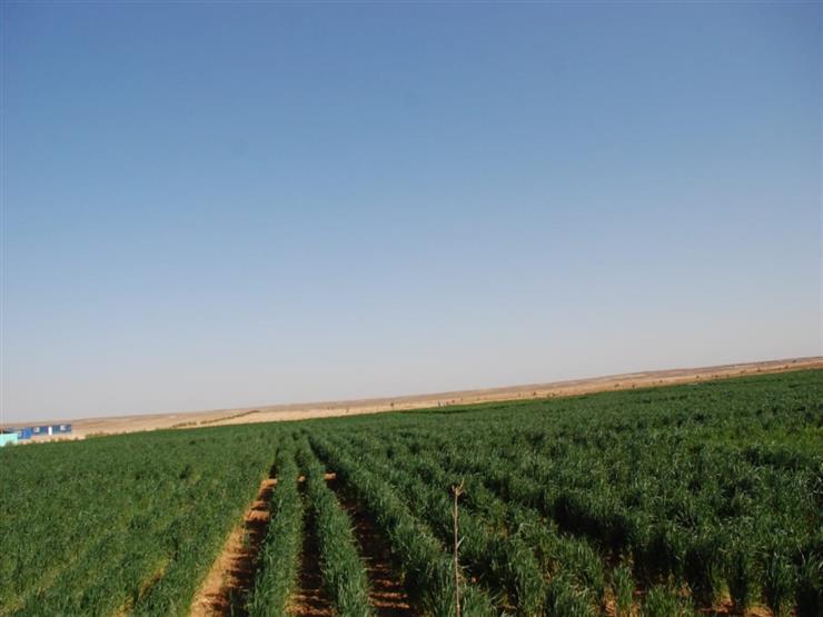 الزراعة تكشف نتائج تجربة ترشيد المياه بمشروع غرب المنيا