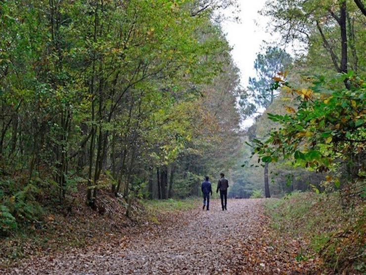 دراسة: المشي في الحدائق له تأثير سحري على الصحة