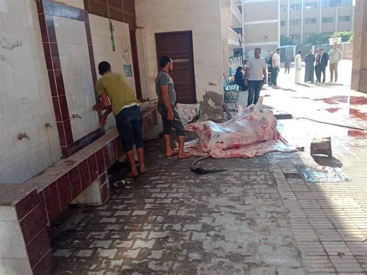 أراد استغلال مياه الحمامات.. مواطن يذبح أضحيته داخل مدرسة في القليوبية