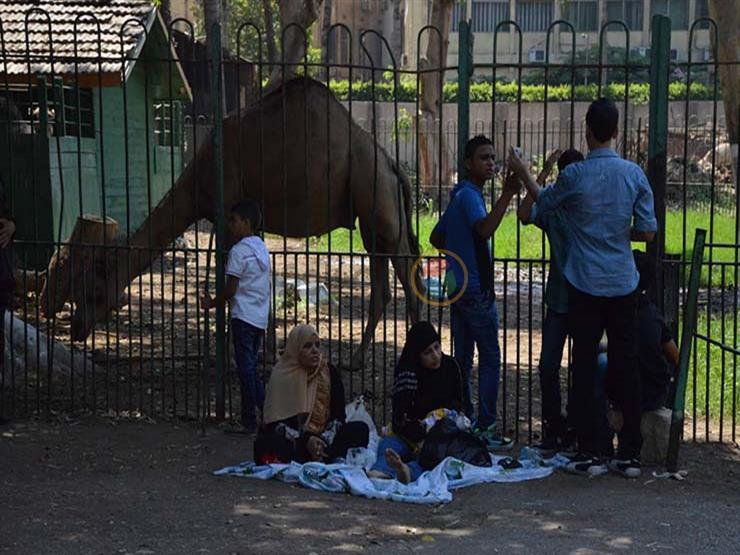 بـ5 جنيهات فقط.. كيف استمتع زوار حديقة الحيوان بعيد الأضحى؟ -فيديو