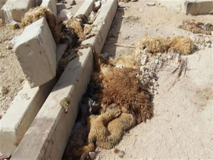 الأزهر: ترك أثر الدم ومخلفات الذبح بالشارع من السيئات