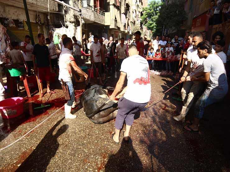 الزراعة: ذبح أكثر من 11 ألف أضحية مجانا خلال عيد الأضحى