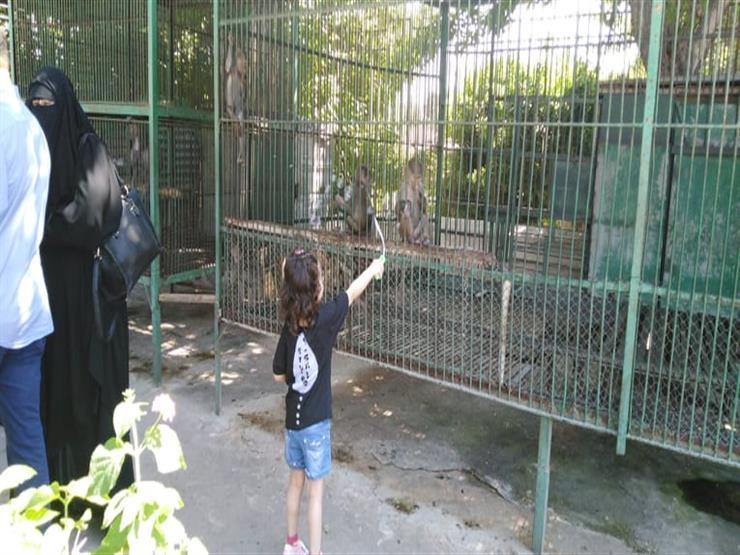 حديقة الحيوان بالإسكندرية تستقبل 30 ألف زائر في ثلاثة أيام خلال العيد