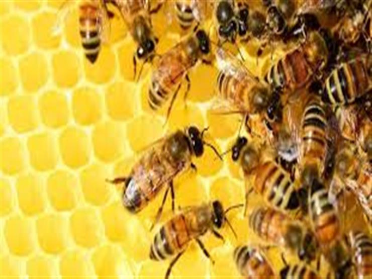 لهذه الأسباب عليك النوم في غرفة واحدة مع النحل