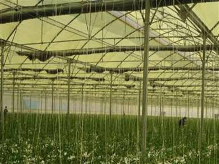 شعبة الخضروات: مشروع الصوب الزراعية سيضبط السوق ويزيد المعروض