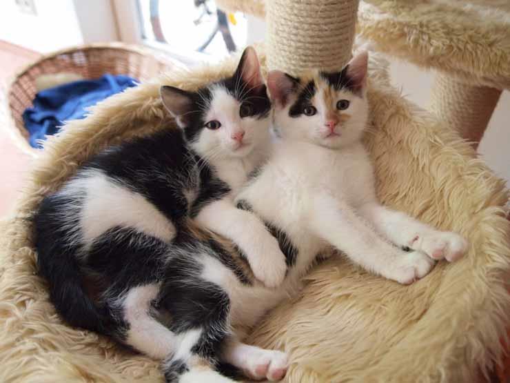 بالفيديو| أمين الفتوى: الإنفاق على المحتاجين أولى من الإنفاق على القطط