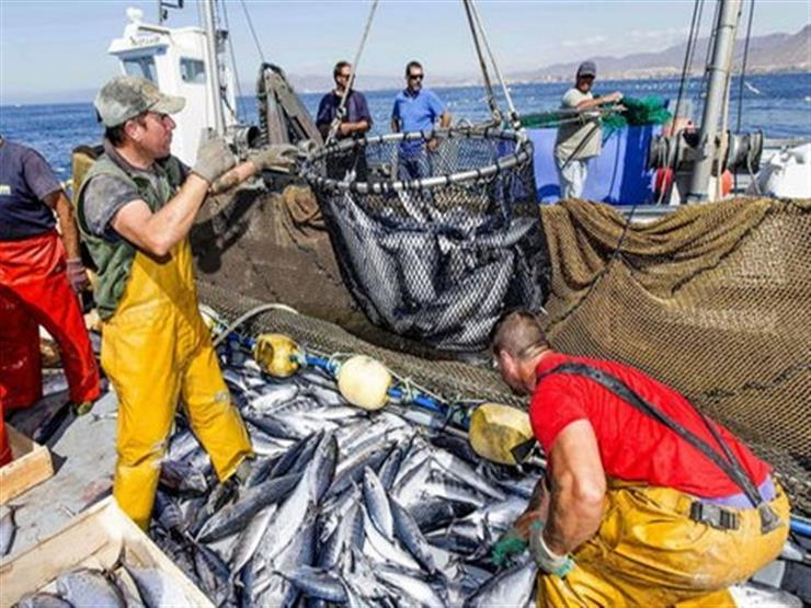 الإفتاء تؤكد: صيد الأسماك بالصعق الكهربائي حرام شرعًا