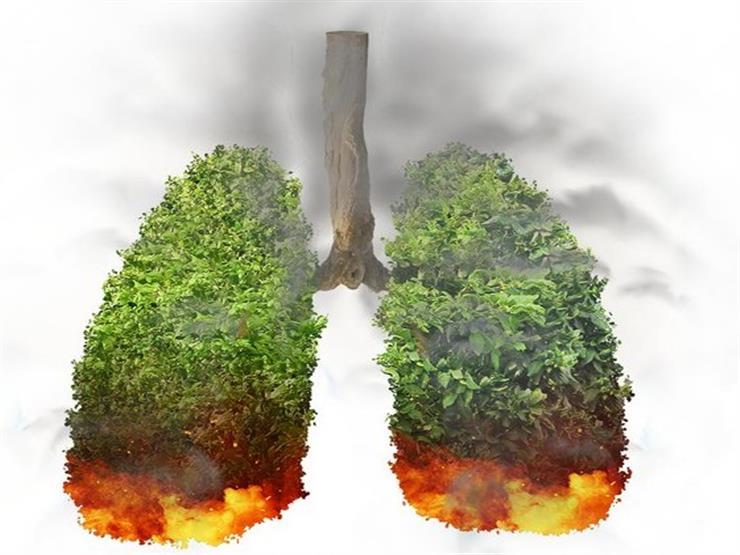 """""""رئة الأرض تختنق"""".. كل ما نعرفه عن حرائق الأمازون (س/ج)"""