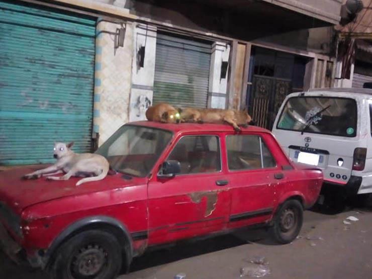 """حملة لإعدام """"الكلاب الضالة"""" في حي الجمرك بالإسكندرية"""