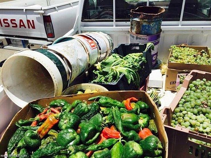 ضبط 27 طن فواكه وخضروات غير صالحة للاستهلاك الآدمي بالشرقية