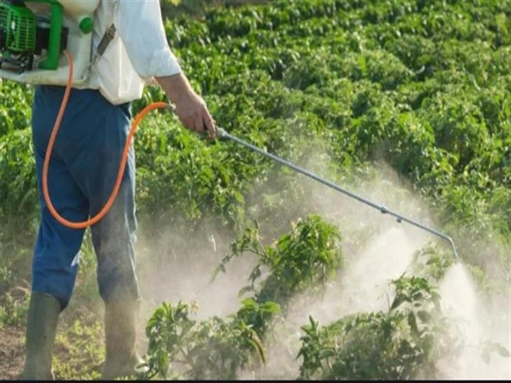المفوضية الأوروبية تعتزم حظر المبيد الحشري الزراعي كلوربيريفوس