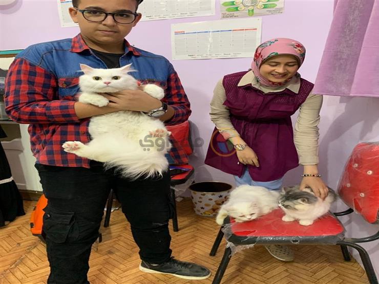بالصور.. مسابقة لـ ملكة جمال القطط  في كفر الشيخ.. والجوائز    مصراوى