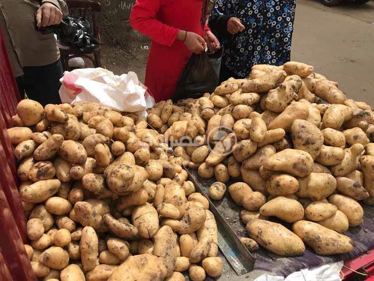 5.5 جنيه لكيلو البطاطس.. أسعار الخضر والفاكهة في سوق الجملة بالعبور اليوم