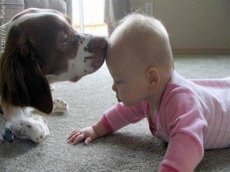 خبراء يحذرون من ترك الطفل بمفرده مع كلب