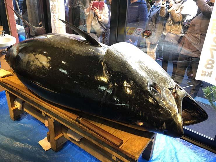 يصطادون سمكة قيمتها 3 ملايين دولار.. ويلقون بها في البحر