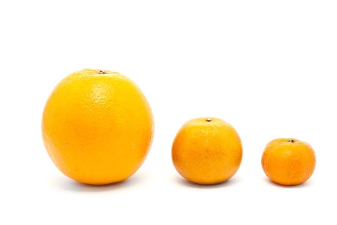 أبرزها المكسرات.. 8 أطعمة تساعد على تكبير حجم الثدي (صور)
