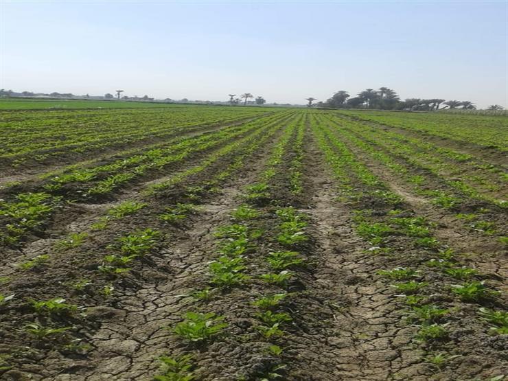 الحكومة ترد على شائعة فرض ضرائب على المزارعين بمحافظات الجمهورية