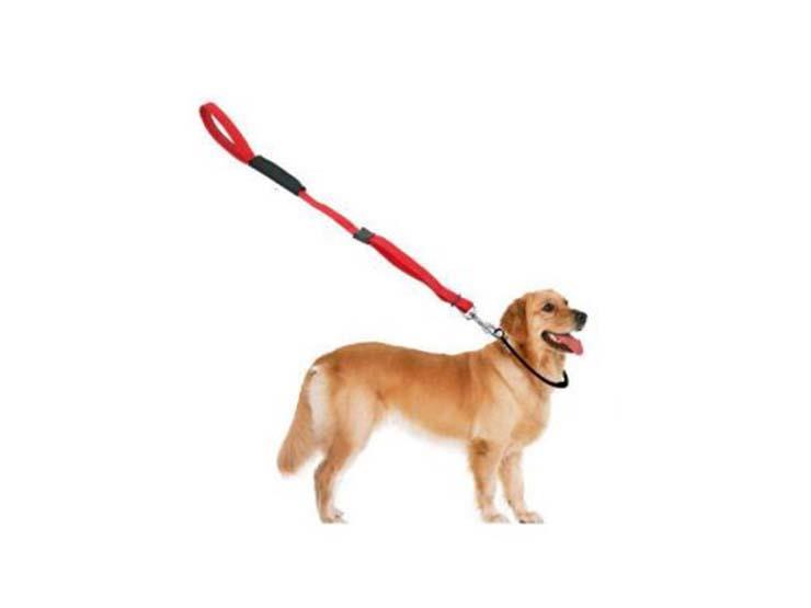 الطوق أم السرج.. أيهما أفضل للتعامل مع كلبك؟