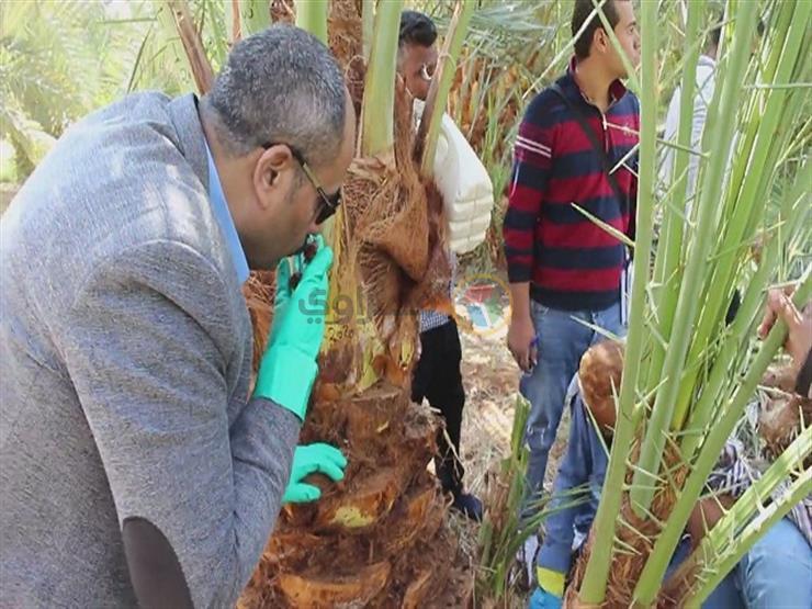 جانب من الدورة التدريبية لمزارعي الوادي الجديد لمكافحة سوسة النخيل